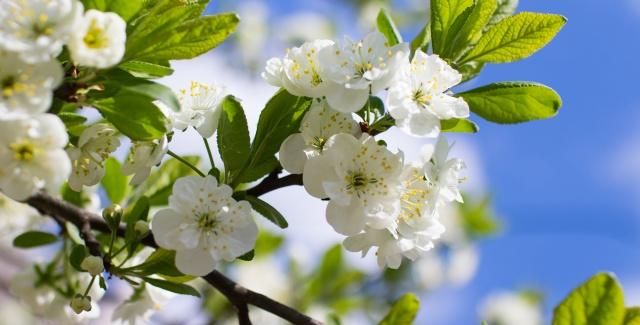 Spring BizInnovator PD